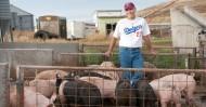 Lindy Hinkelman, pig farmer and fantasy baseball genius. Photo by Rajah Bose for The New York Times